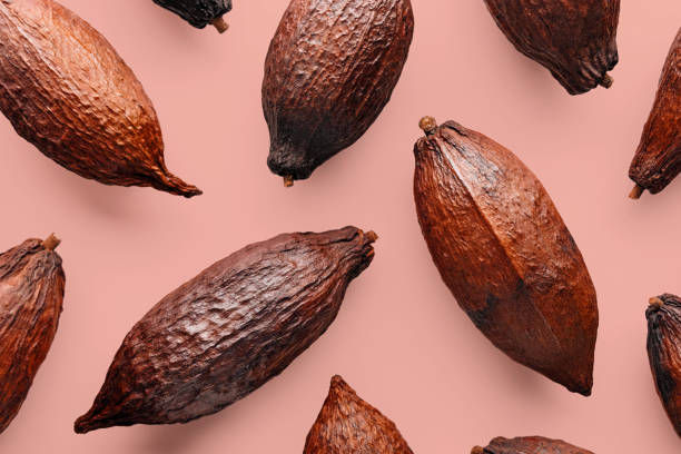Cocoa pod Cocoa pods on a pink background, creative flat lay food concept plant pod stock pictures, royalty-free photos & images