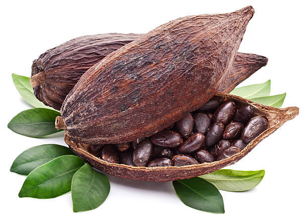 Cocoa pod. Cocoa pod on a white background. plant pod stock pictures, royalty-free photos & images