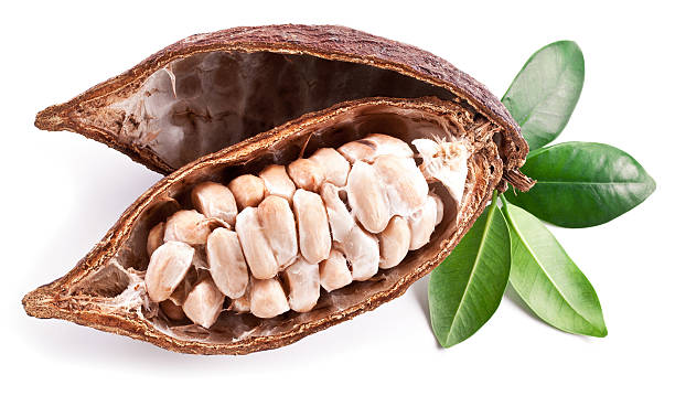 Cocoa pod Cocoa pod on a white background. plant pod stock pictures, royalty-free photos & images