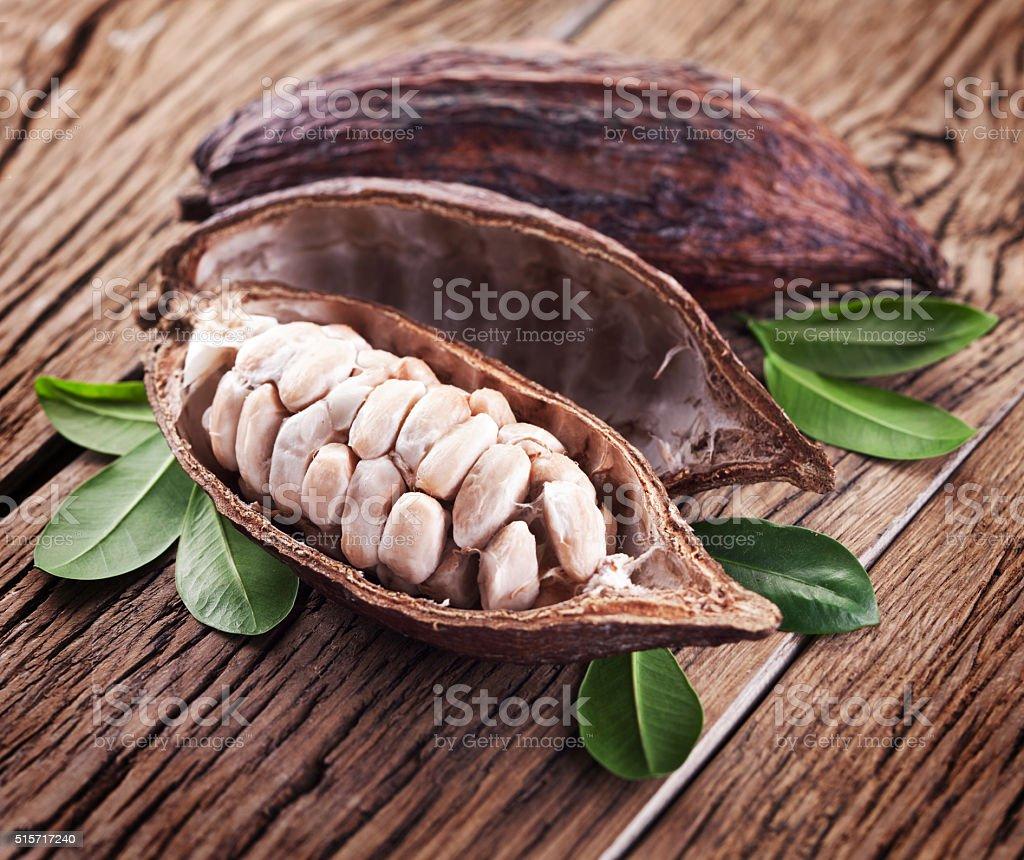 Dispositivo de cacao. - foto de stock