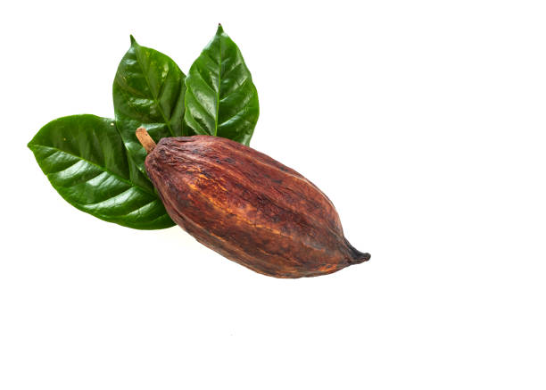 Cocoa pod with Cocoa leaf on a white Cocoa pod with Cocoa leaf on a white background cocoa bean stock pictures, royalty-free photos & images