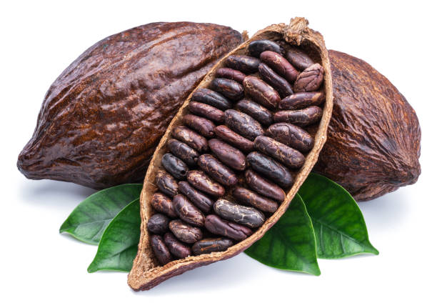 Cocoa pods and cocoa beans - chocolate basis. Cocoa pods and cocoa beans - chocolate basis on a white background. plant pod stock pictures, royalty-free photos & images