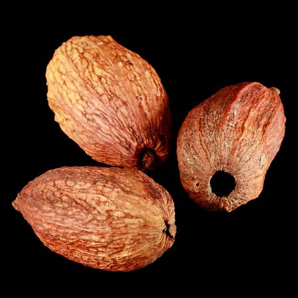 Cocoa pods stock photo