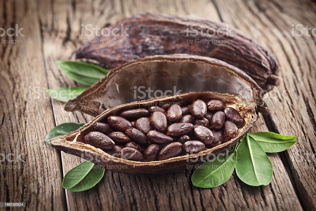 Cocoa pods royalty-free stock photo