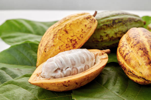 Cocoa pods with Cocoa leaf on a white background Ripe Fruit Cocoa pods with Cocoa leaf on a white background theobroma stock pictures, royalty-free photos & images