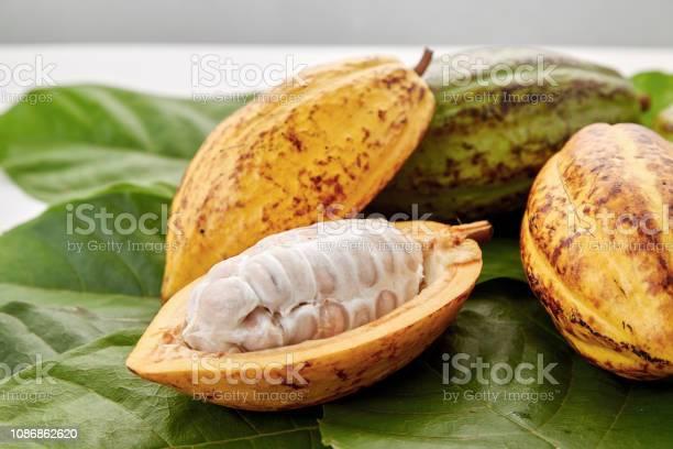 Cacao Peulen Met Cacao Blad Op Een Witte Achtergrond Stockfoto en meer beelden van Azië