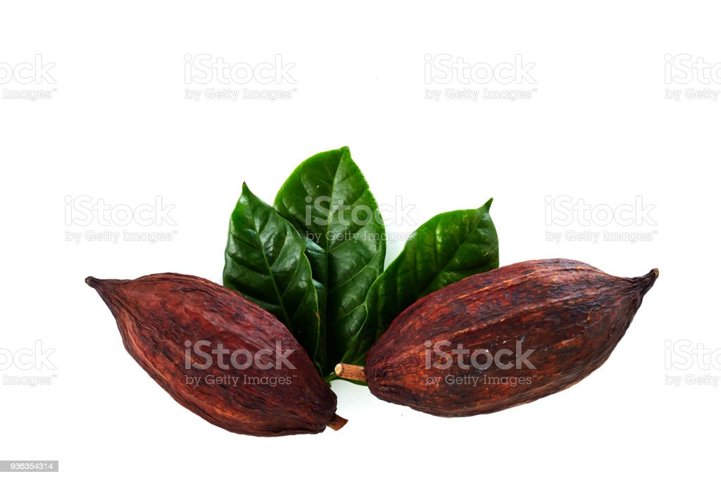 cocoa pods with Cocoa leaf stock photo