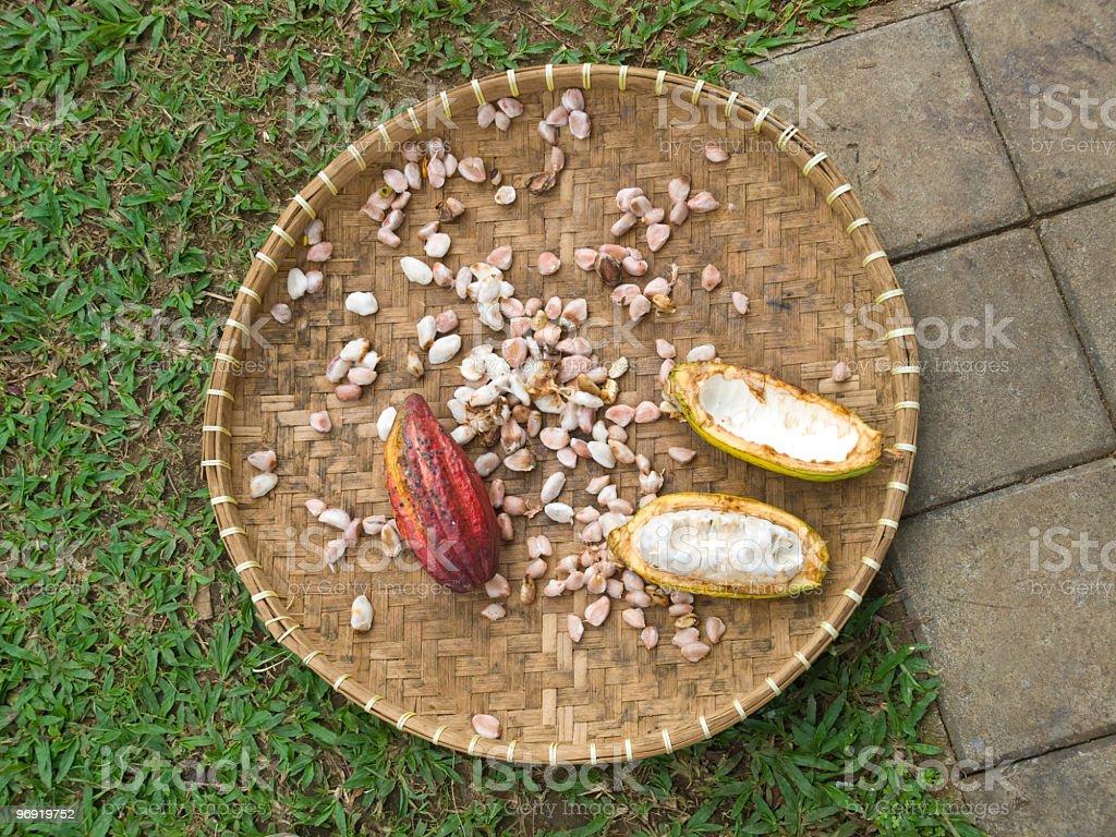 cocoa seed royalty-free stock photo