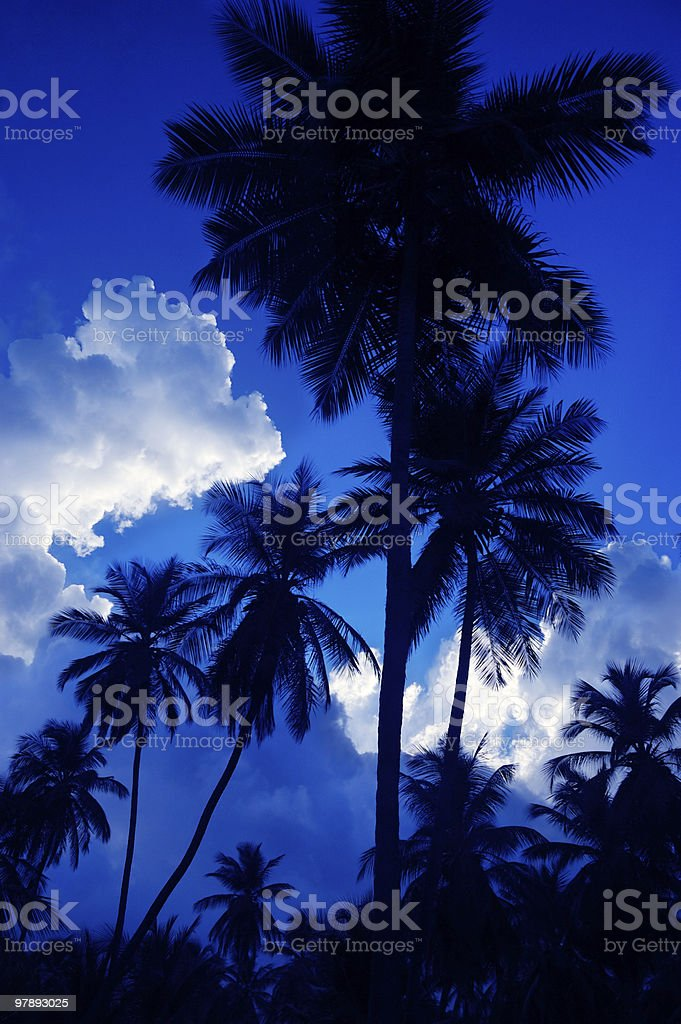 Cocontut trees with moonlight royalty-free stock photo