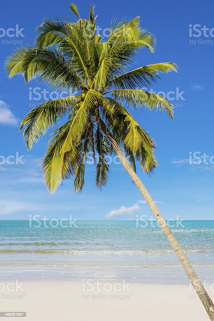 Coconut beach on daylight royalty-free stock photo