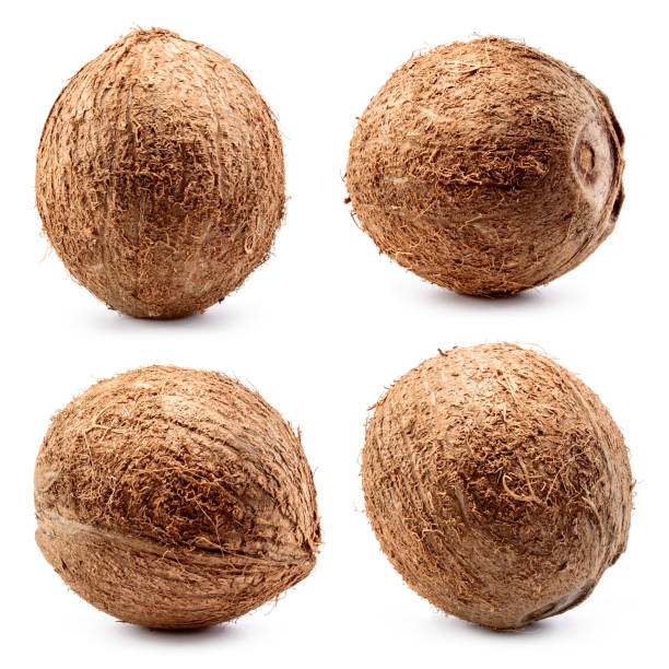 Coconut. Coconut isolated on white. Collection. Full depth of field. stock photo