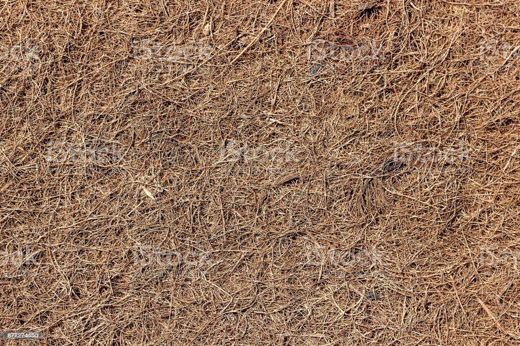Coconut coir - a filler for mattresses. stock photo