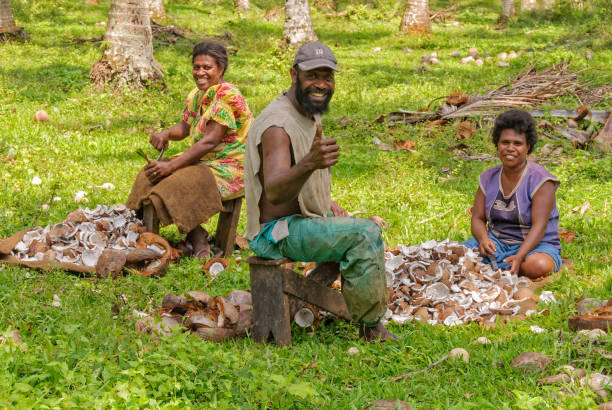 Coconut copra harvest - Espiritu Santo Espiritu Santo, Vanuatu - September 26, 2012: A family of three smile at the camera during coconut copra harvest vanuatu stock pictures, royalty-free photos & images