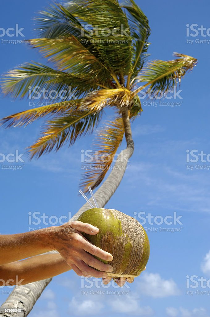 Coconut drink and palm royalty-free stock photo