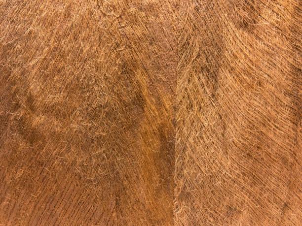 Coconut fiber background. stock photo