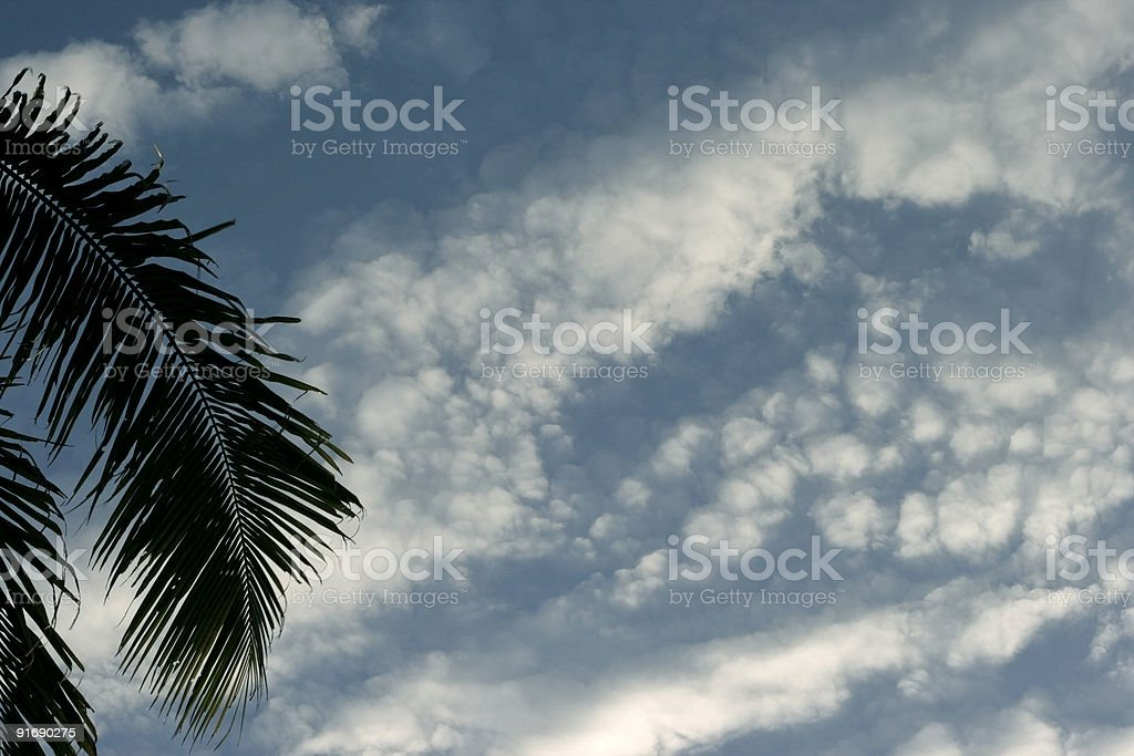 Coconut frond in a fluffy clouds stock photo