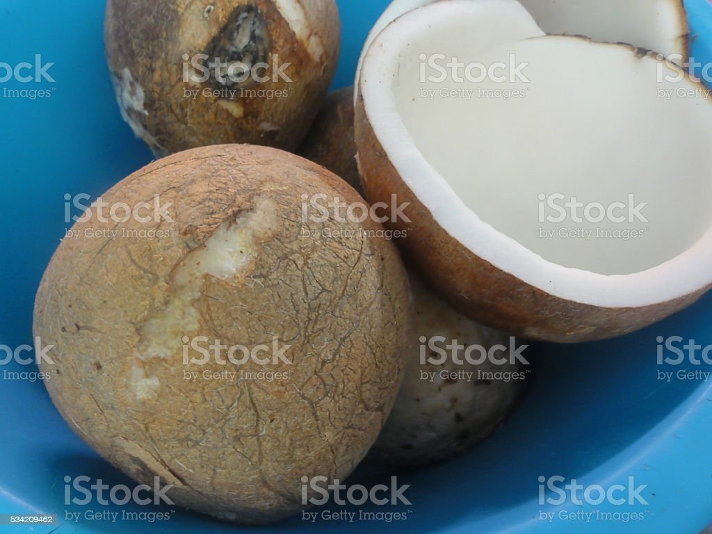 Кокосовое фруктов Таиланд стоковое фото