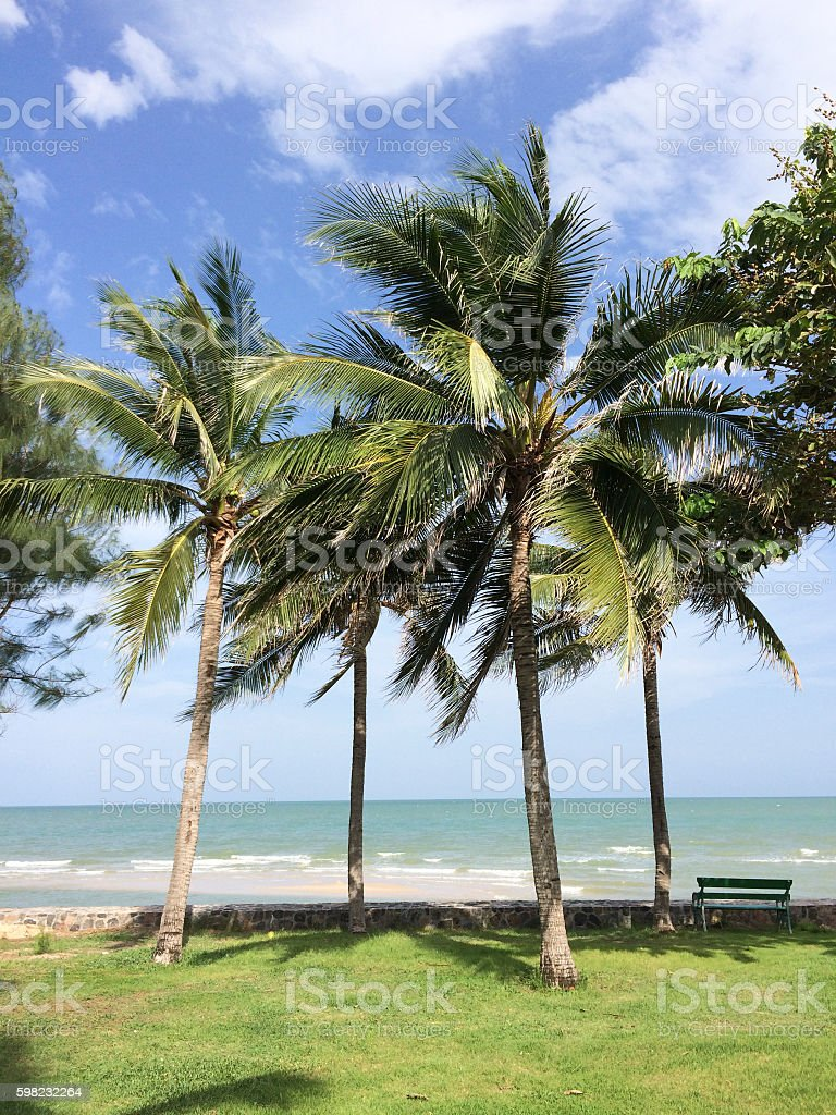 coconut  in beach background foto royalty-free