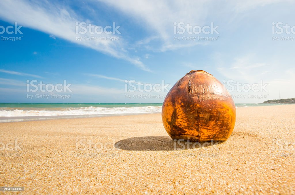 Coconut in focus stock photo
