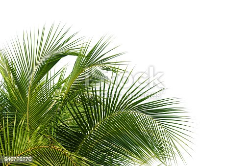 on top of tropical coconut palm tree isolated on white backgrounds for design elements.