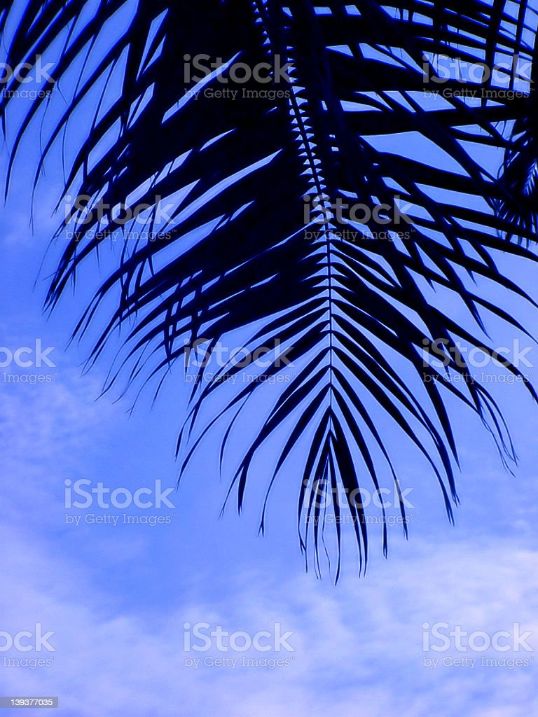 Coconut Leaves royalty-free stock photo