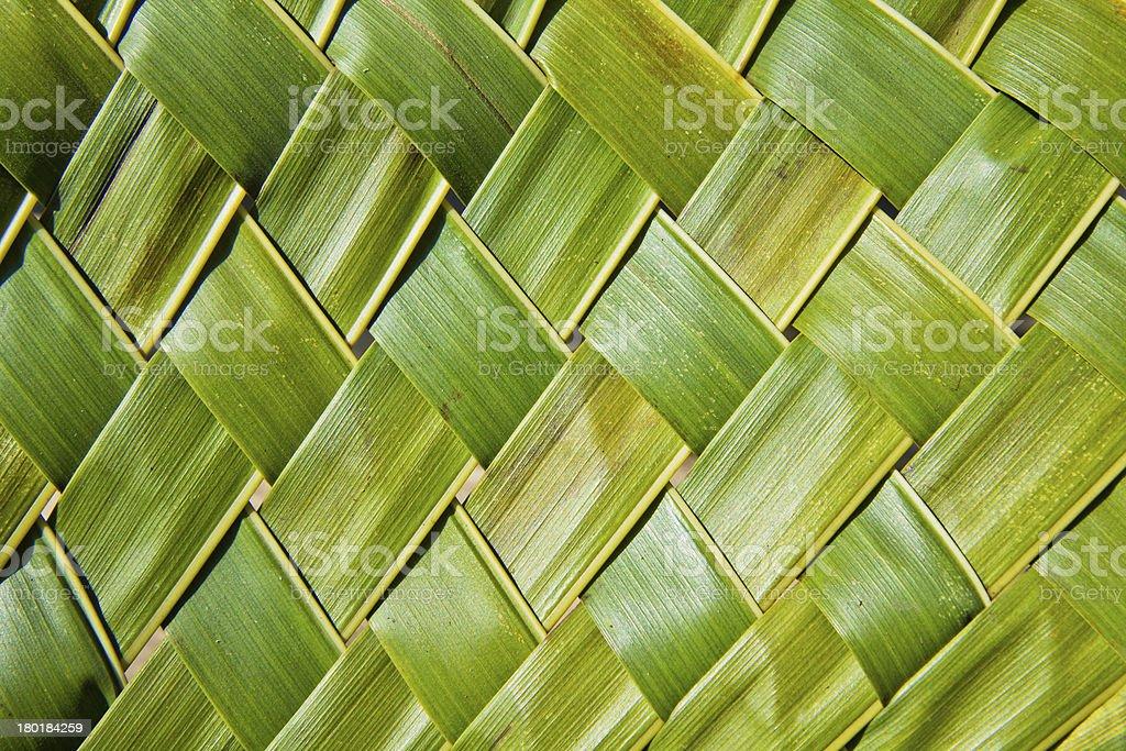 coconut leaves stock photo