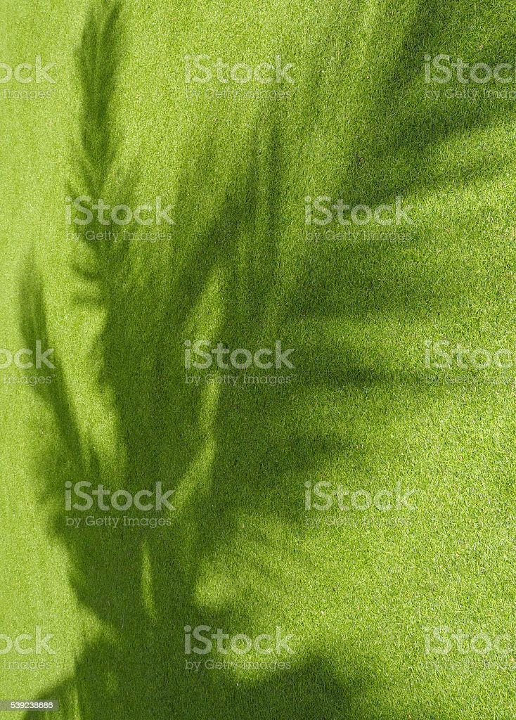 Coconut leaves ' s shadow royalty-free stock photo