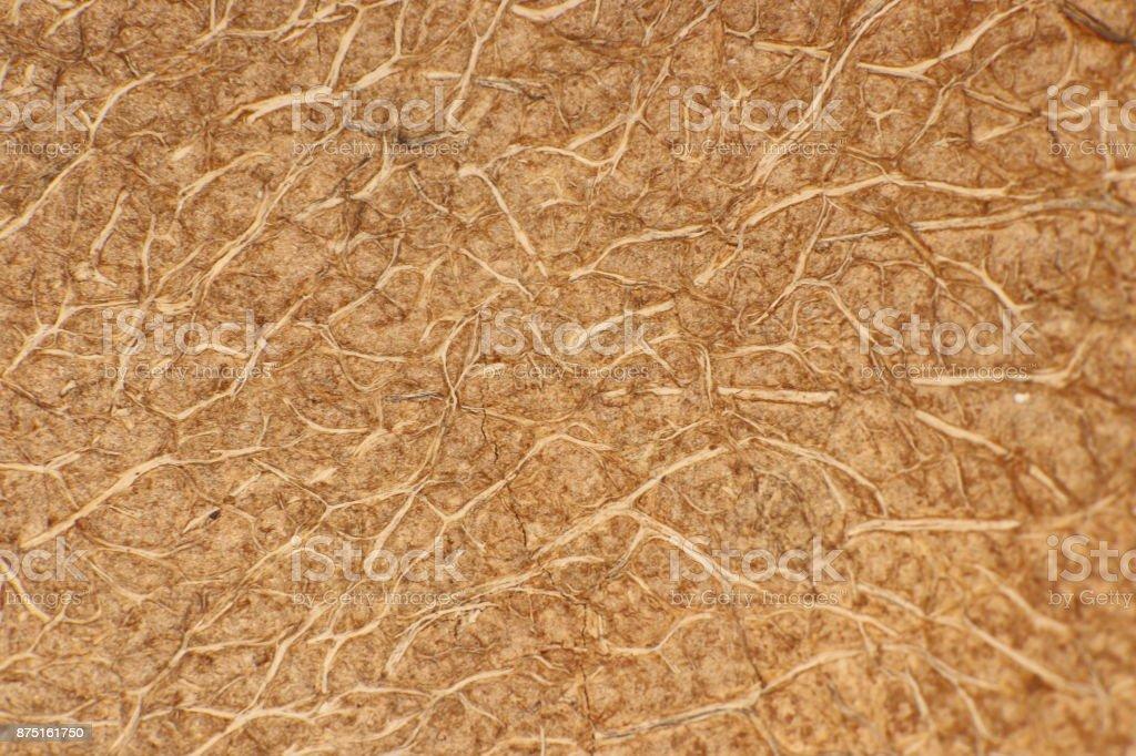 Coconut Nut Fibers Surface Texture. Natural Tropical Background. Macro Closeup. stock photo