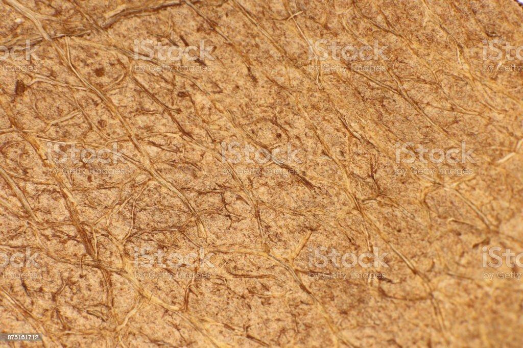 Coconut Nut Texture. Natural Tropical Background. Macro Closeup. stock photo