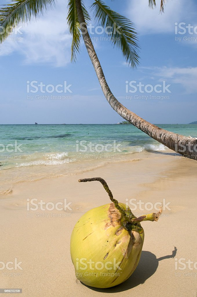 Coconut on a beach. royalty-free stock photo