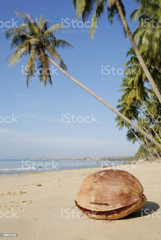 Coconut on Beach royalty-free stock photo