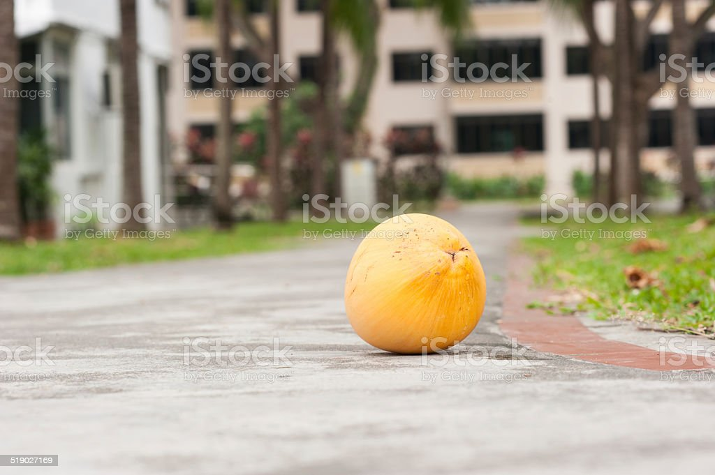 Coconut On Footpath stock photo