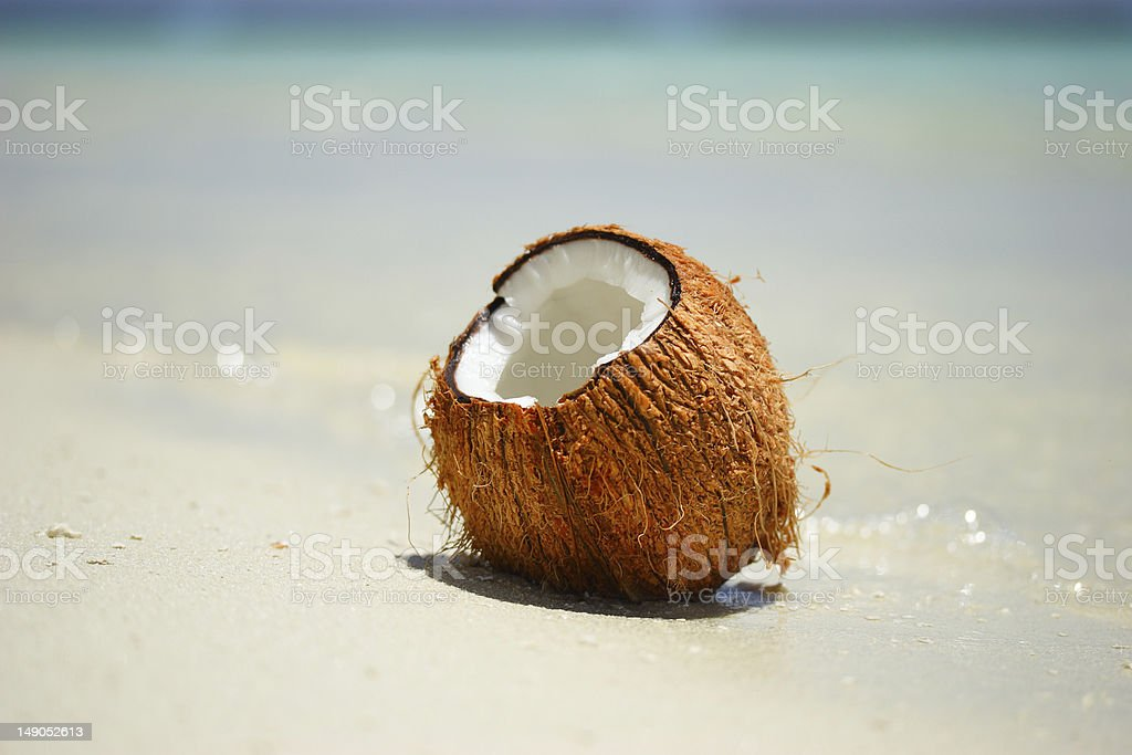 Coconut on the beach stock photo