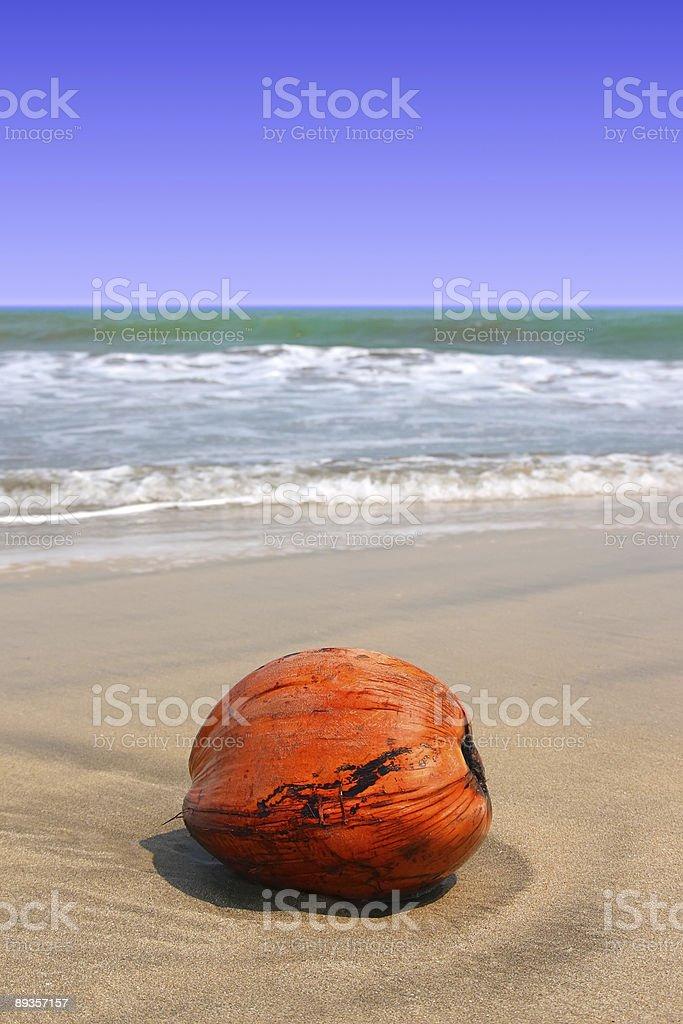 coconut on the beach royalty free stockfoto