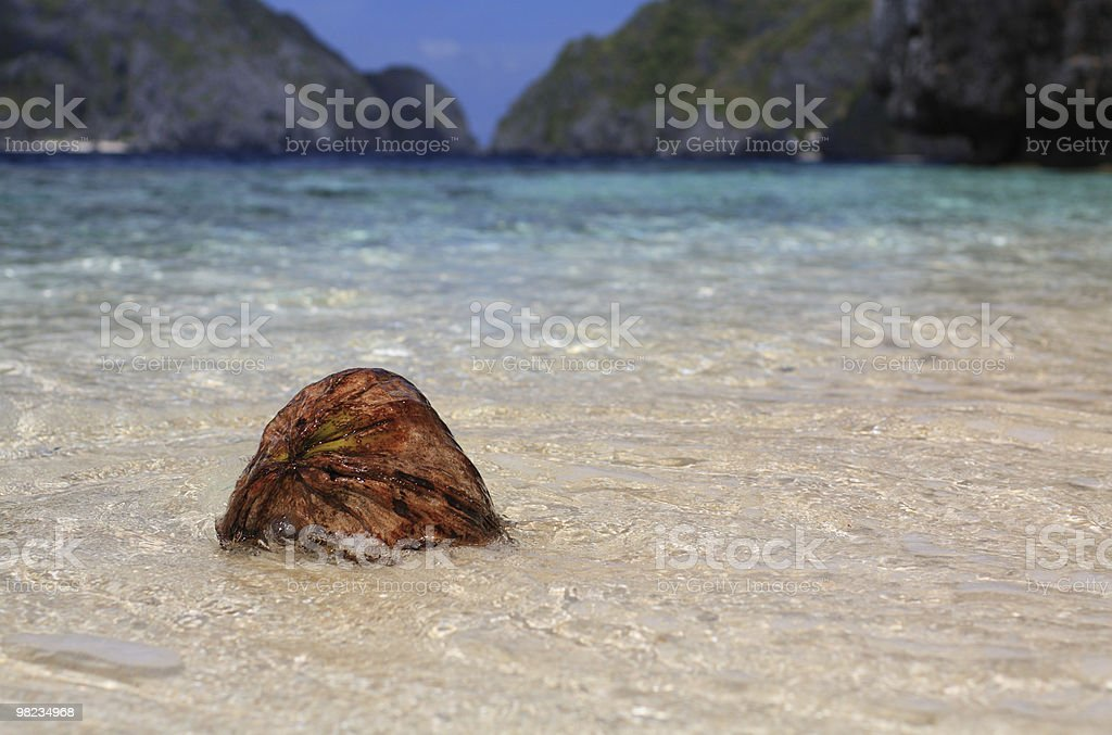 Coconut on the tropical beach royalty-free stock photo