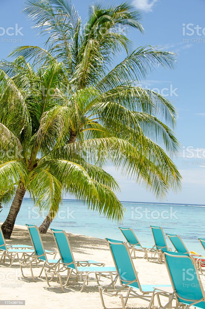 Coconut Palm and Ocean royalty-free stock photo