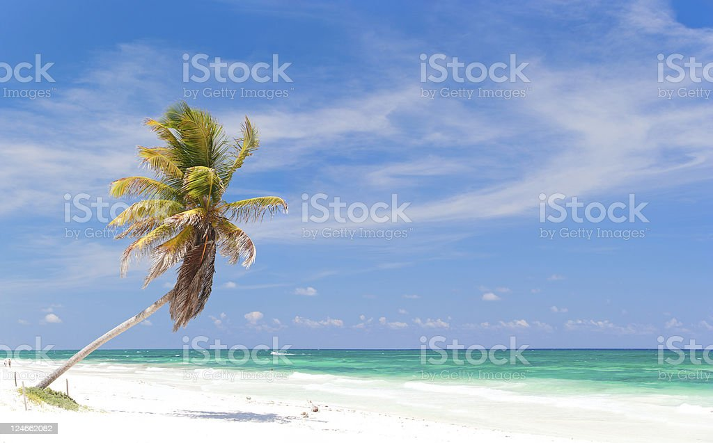 Coconut palm at beach royalty-free stock photo