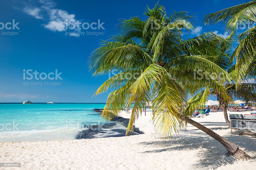 Coconut palm on caribbean beach stock photo