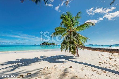 istock Coconut palm over the paradise beach 916464300