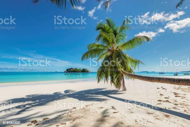 Coconut palm over the paradise beach picture id916464300?b=1&k=6&m=916464300&s=612x612&h=p4cojf2kgkwrelyouhotklnj6p3 yhocc hp u33wjc=