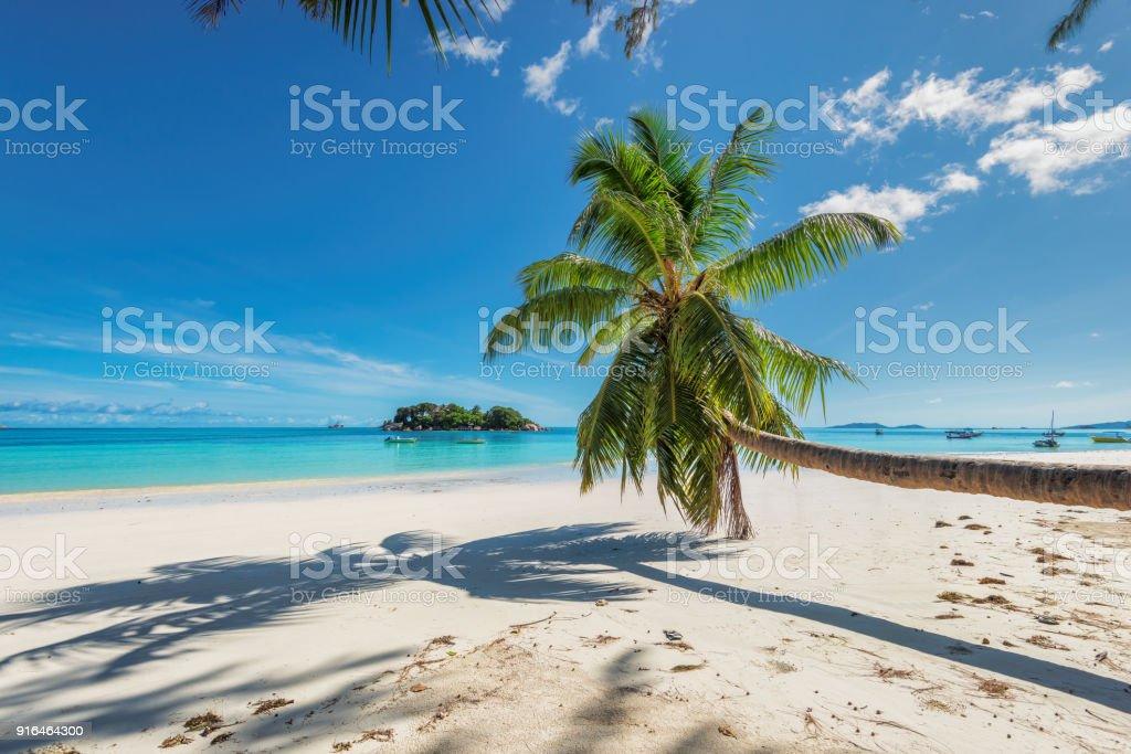Palma de coco en la playa de paraíso - foto de stock