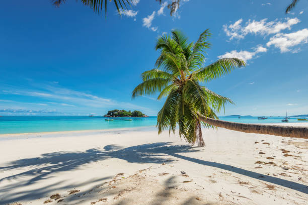 coconut palm over the paradise beach - caribbean stock pictures, royalty-free photos & images