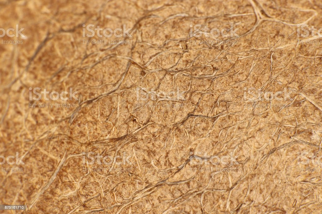 Coconut Palm Plant Nut Fibers Surface Texture. Natural Tropical Background. Macro Closeup. stock photo