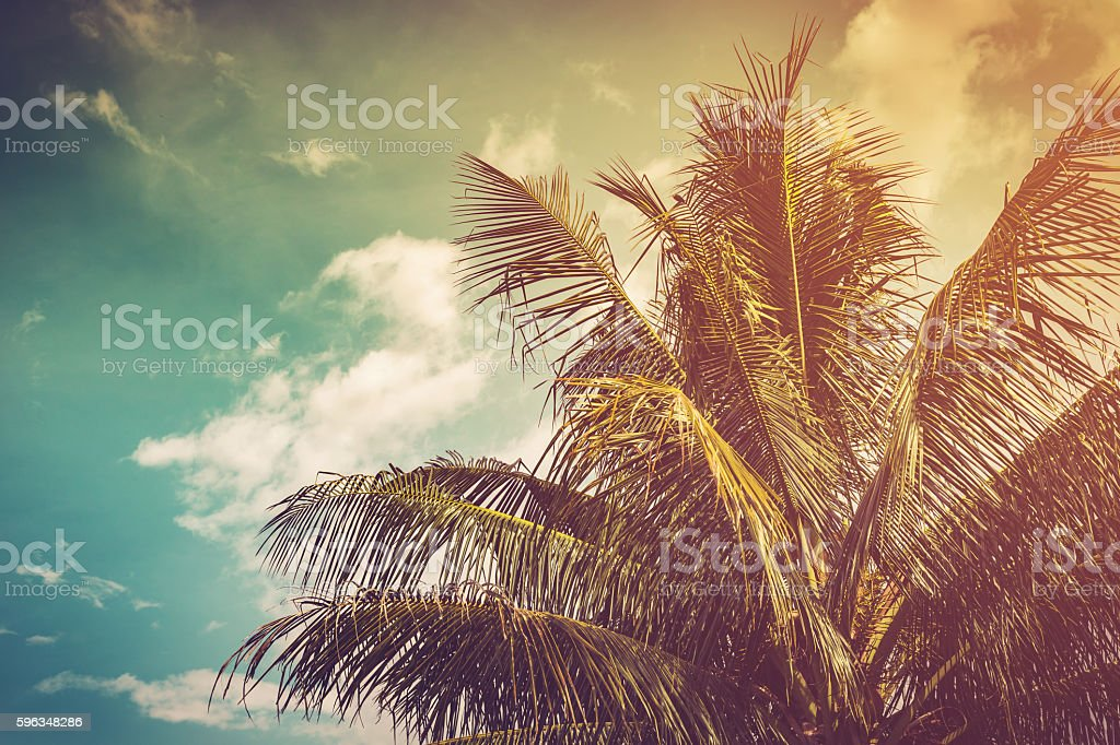 coconut palm tree and sky in summer with vintage toned. royalty-free stock photo
