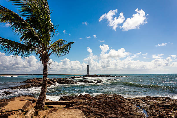 coconut palm tree and square lighthouse on windy sunny day - itacare bildbanksfoton och bilder