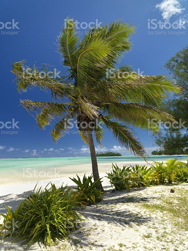Coconut Palm Tree, Dream Beach royalty-free stock photo
