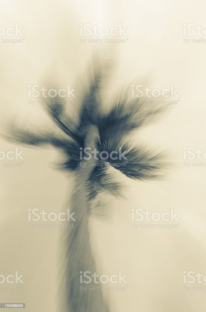 coconut palm tree dreamy effect in sepia tone royalty-free stock photo