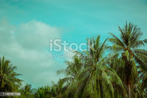 Coconut palm tree unset light. Vintage tropical background. Travel card. Retro toned poster. Tropical vibes. Summer vacation concept.