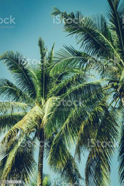 Photo of Coconut palm tree foliage under sky. Vintage background. Retro toned poster.