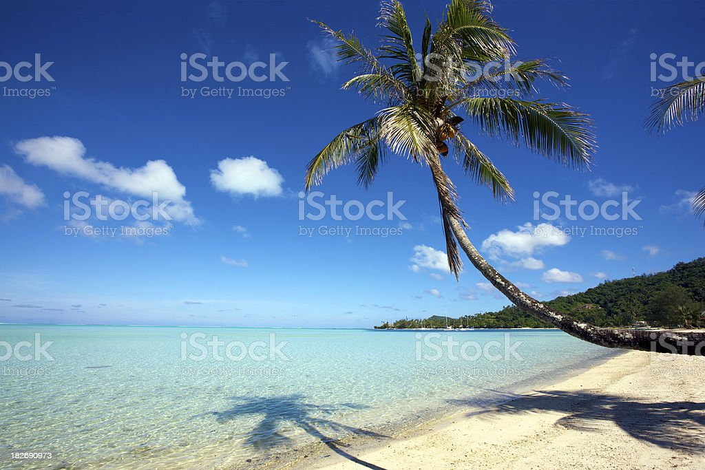 Coconut palm tree in white sand beach royalty-free stock photo